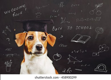 Smart dog with glasses near a school board with inscriptions. Education and learning concept.