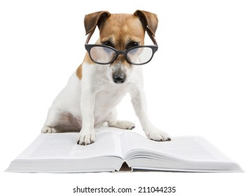 Image result for dog reading a book