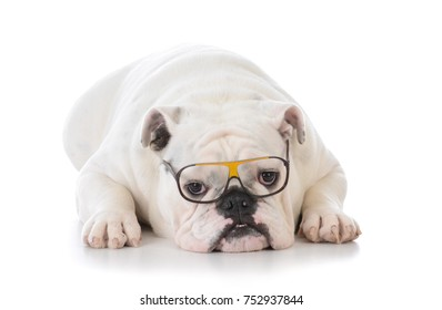 smart dog wearing glasses on white background