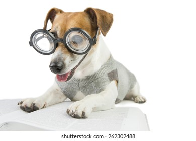 Smart dog wearing glasses and a sweater student studying reading book and summary of lectures