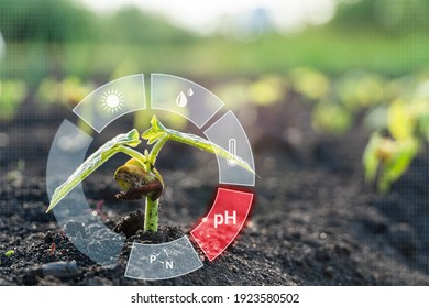 Smart farm technology for detection and control system of Plant sprout growing with red alert icon of pH. Innovation technology for agriculture 4.0 - Shutterstock ID 1923580502