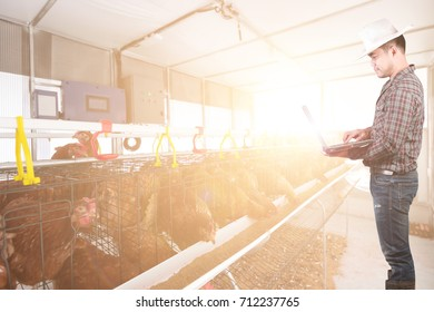 Smart farmer use computer for control system intelligent with chicken eggs in modern farm in sunrise.