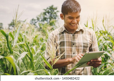 smart farmer using technology in an agriculture field, man checking quality by using tablet in farm field