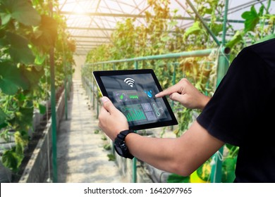 Smart farming argriculture concept.Man hands holding tablet on blurred organic farm as background