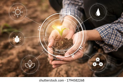 Smart farming with IoT,Growing corn seedling with infographics. Smart farming and precision agriculture 4.0, agriculture concept