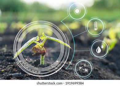 Smart farming with IoT,Growing corn seedling with infographics. Smart farming and precision agriculture 4.0 - Shutterstock ID 1919699384