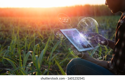 Smart farming Precision Agriculture by using Electromagnetics Soil Maps and Variable Rate Fertilizer/Lime, Vegetation Images(Normalized Difference Vegetation Index-NDVI).