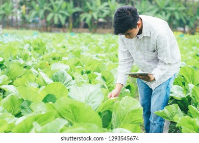 Smart farming using modern technologies in agriculture. Young  agronomist farmer using apps and internet reading report form tablet. Technology and agriculture concept.