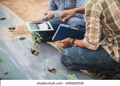 Smart farming, using modern technologies in agriculture. Man agronomist farmer with digital tablet computer in green house of melon farm.
