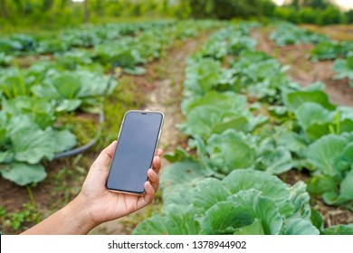 Smart farming, using modern technology mobile in agriculture, vegetable organic farming