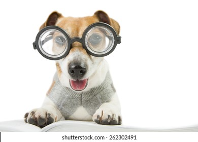 Smart fun dog is Studying. Glasses for poor vision