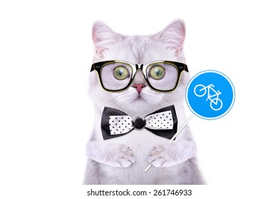 Smart handsome cat with icon bike. Funny animals. Trendy cat dressed in beautiful clothes