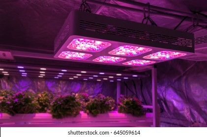 Smart indoor farm and Photoperiodism concept. Selective focus on Artificial LED panel light source used in an experiment on vegetables plant growth