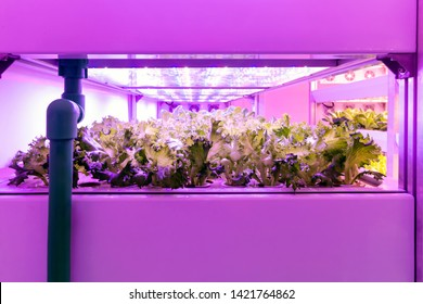 Smart indoor farm , Photoperiodism growth light for plants concept. Artificial LED panel light source used in an experiment on vegetables plant growth