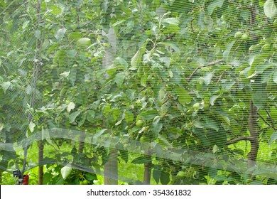 Smart net system. Apple tree netting