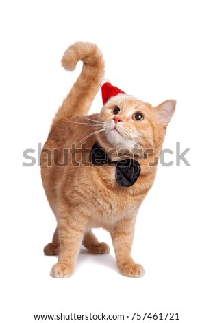 Smart Red Cat Christmas Outfit Bow Stock Photo (Edit Now) 757461721 ...