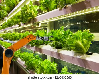 Smart robotic farmers in agriculture futuristic robot automation to vegetable farm