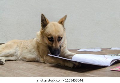 Smart shepherd dog read a book to get certification for training.Fun cute school dog.