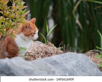 smart wild cat in the nature field