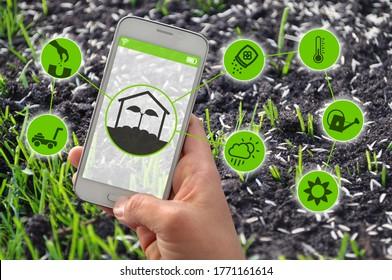 Smartphone mit intelligenten Apps für Landwirtschaft und Gartenbau vor dem Grassaat