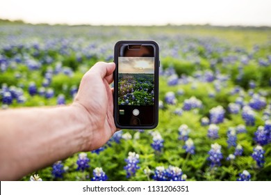 Smartphone taking picture of wild bluebonnets