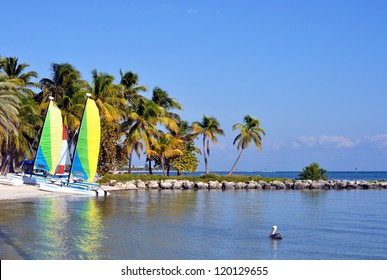 Smathers Beach On The Atlantic Ocean in Key West, Florida, With Palm Trees, Catamaran Sailboats And A Pelican