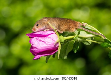 Smell the rose