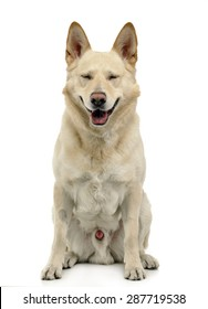 Smile dog sitting in white background studio