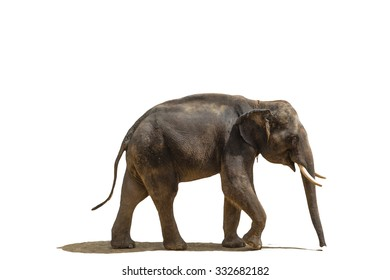 smile elephant in white background