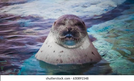 Smile Seal
