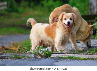 Smiley dog and friend