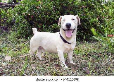 smiley dog on the garden.
