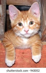 smiley kitty
