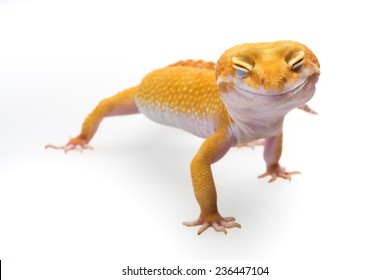 Smiley leopard gecko