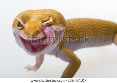 Gecko Lick Eye