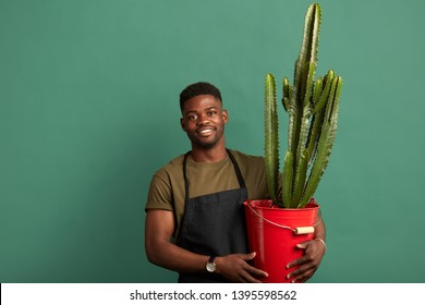Smiling african american male farmer florist dressed in apron standing with a big cactus planted in red bucket isolated green background