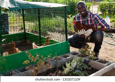 Smiling African American man taking care of hennear henhousel at sunny day