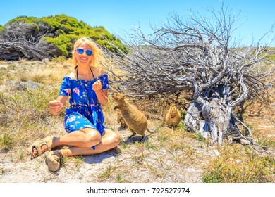 Smiling blonde caucasian tourist woman interacts with two curious Quokka in the wilderness of Rottnest Island, Western Australia. Summer season in a beautiful sunny day, Australia.