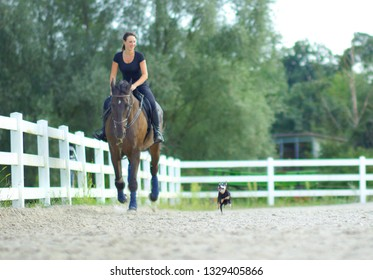Smiling Caucasian woman galloping on a horse while her energetic puppy chases after them around the sandy arena. Happy girl cantering on muscular stallion along the white fence enclosing the paddock.