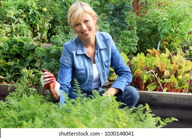 Smiling Caucasian woman gardener in her fifties, pulling an organic carrot out of the ground from her plot in a community vegetable garden.