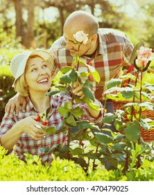 Smiling cheerful  senior couple looking after flowers in the garden