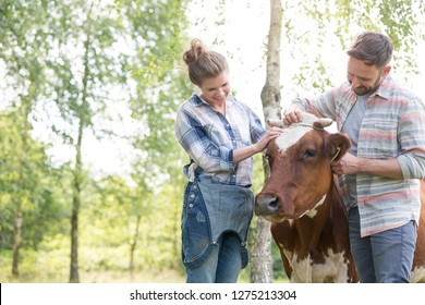 Smiling couple standing with cow at farm