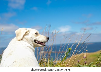 smiling cute beige dog sitting in fields under the blue sky with copy space