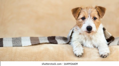 Smiling cute dog puppy lying on the sofa with a striped blanket on a beige background. Web banner with copy space, pet care concept.