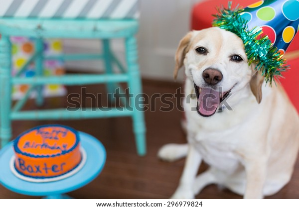 Smiling dog celebrates his birthday