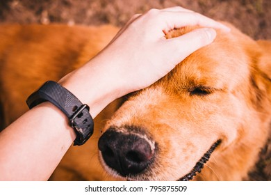 Smiling Dog with Female Hand Patting Dog's Head Concept of Loyalty.