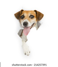 smiling dog looking out from a hole in a paper poster advertising banner. White place for your text