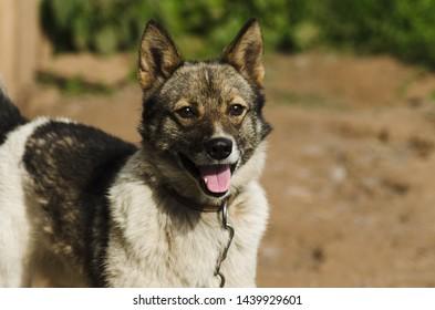 smiling dog, photogenic dog closeup
