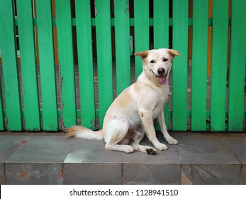Smiling Dog Sitting in Front of Green Wooden Door