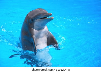 Smiling dolphin on Tenerife, Canary Islands, Spain